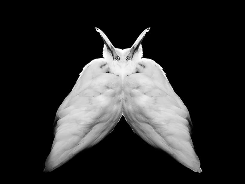 Metamorfosis Animal 4