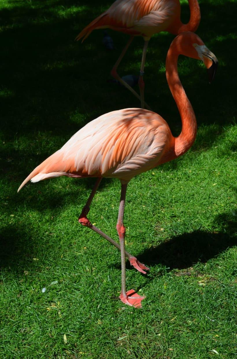 Sesión fotográfica: Zoológico de Madrid 1