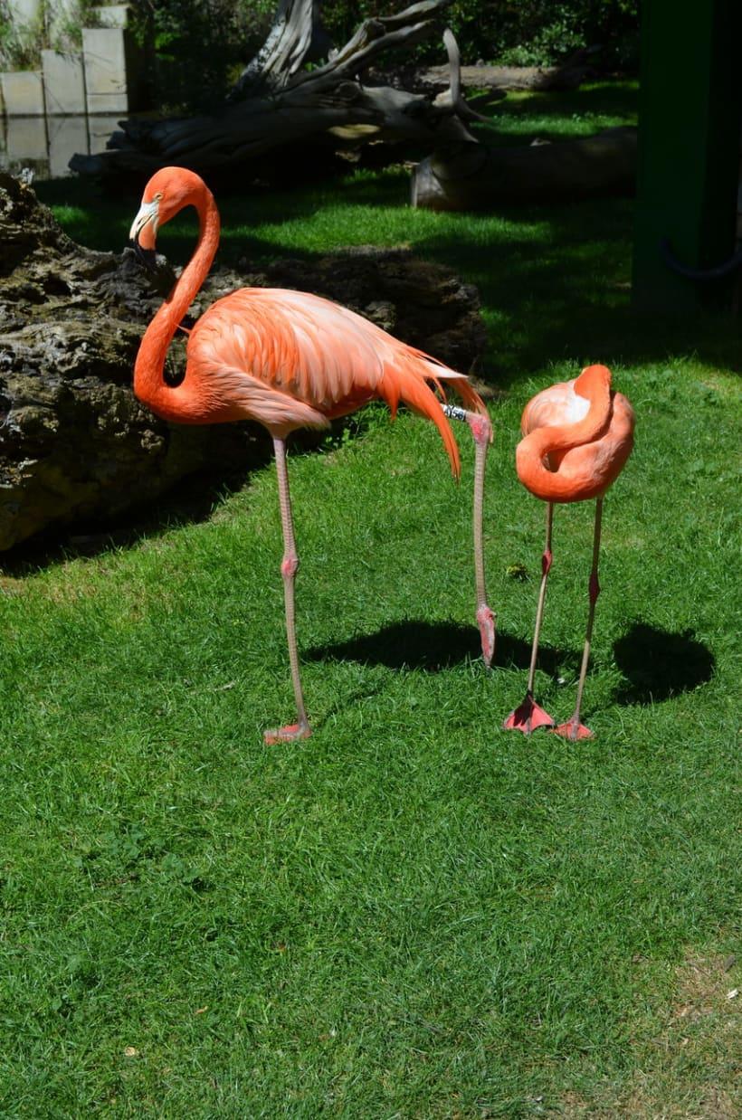 Sesión fotográfica: Zoológico de Madrid 3