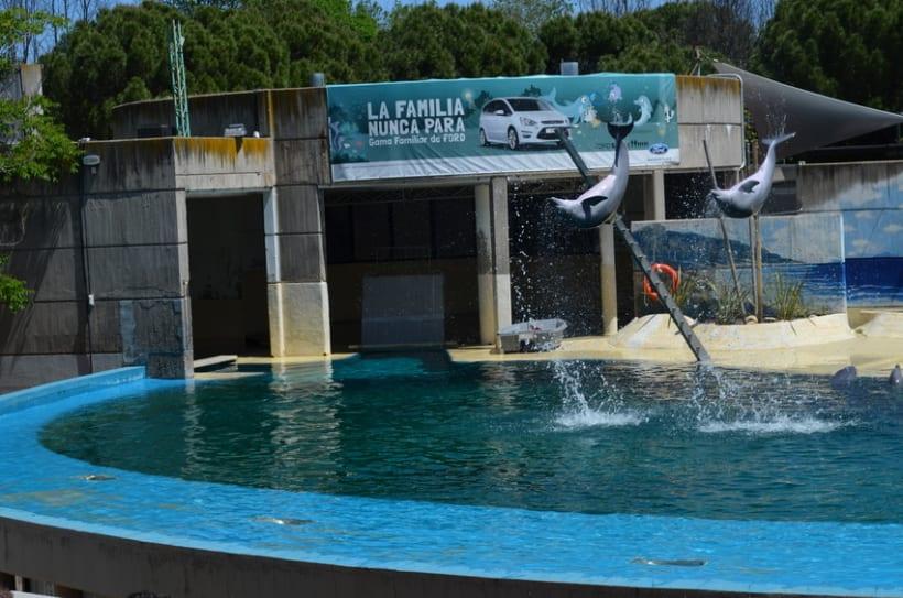 Sesión fotográfica: Zoológico de Madrid 5