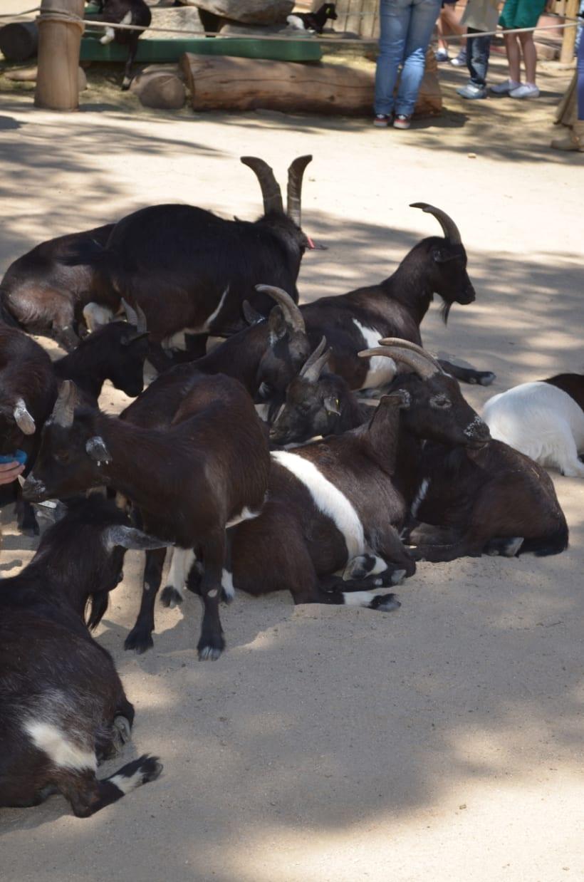 Sesión fotográfica: Zoológico de Madrid 7