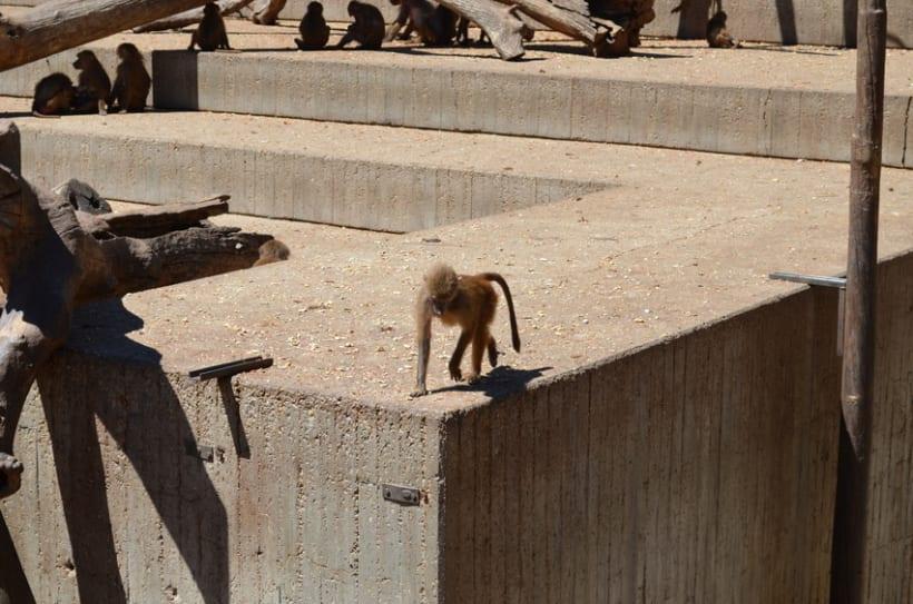 Sesión fotográfica: Zoológico de Madrid 9