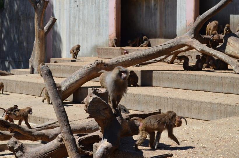 Sesión fotográfica: Zoológico de Madrid 10