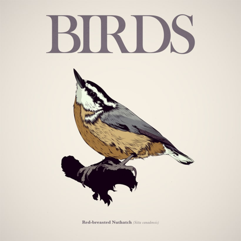 BIRDS // Vector Illustrations Collection -1
