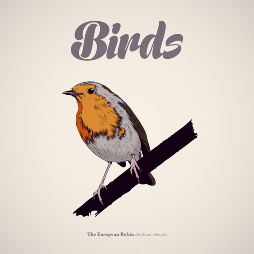 BIRDS // Vector Illustrations Collection 0