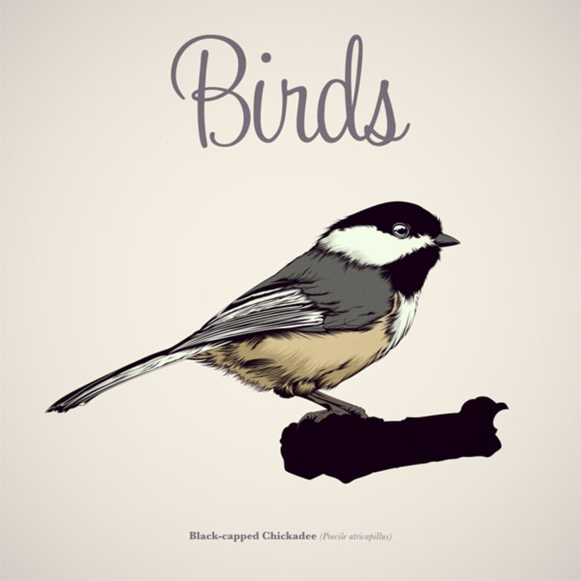 BIRDS // Vector Illustrations Collection 1