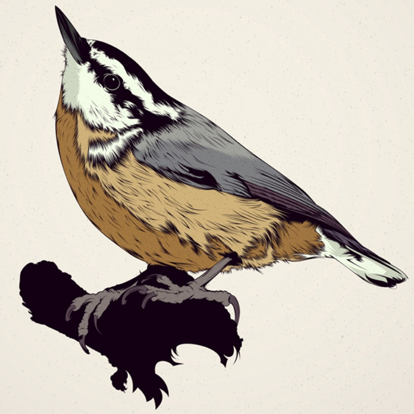 BIRDS // Vector Illustrations Collection 2