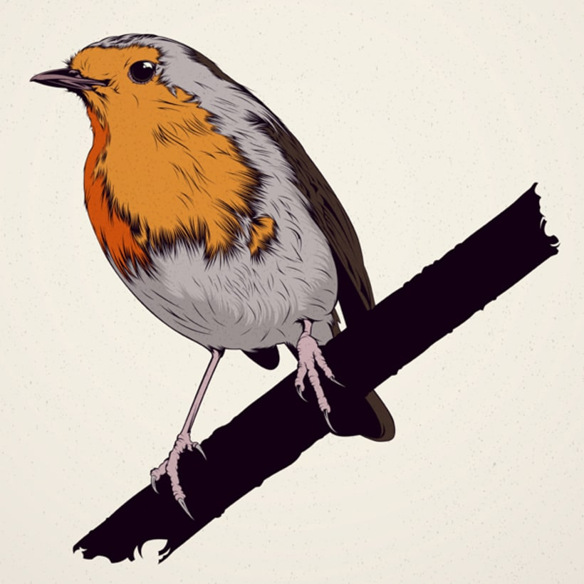 BIRDS // Vector Illustrations Collection 3