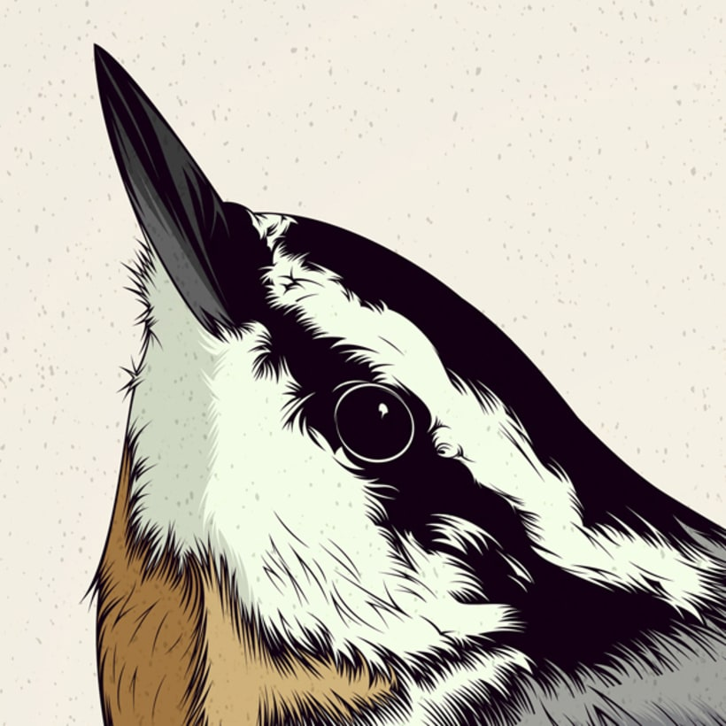 BIRDS // Vector Illustrations Collection 5