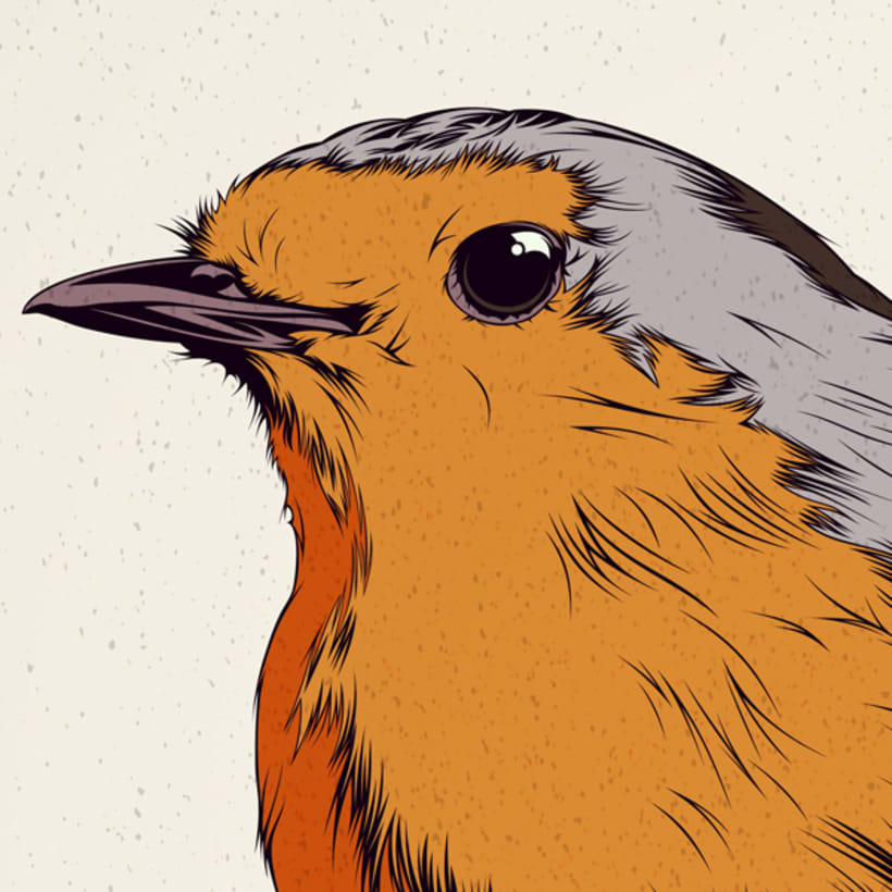 BIRDS // Vector Illustrations Collection 6