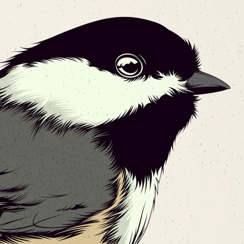 BIRDS // Vector Illustrations Collection 7