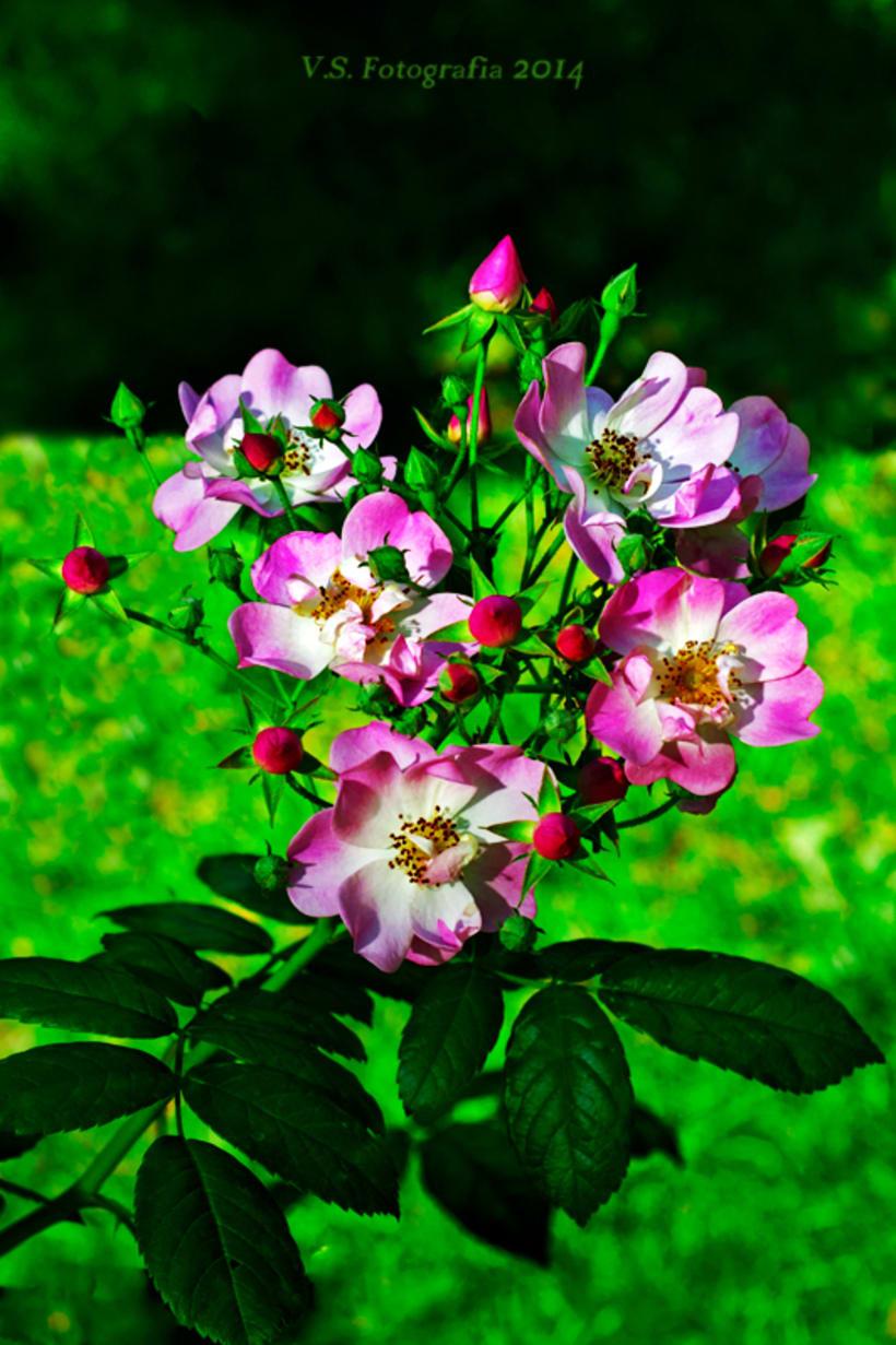 Flores silvestres 2