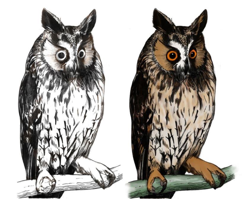 Ilustración científica - Búhos y Lechuzas 1