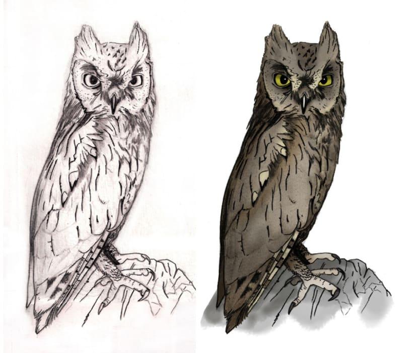 Ilustración científica - Búhos y Lechuzas 5
