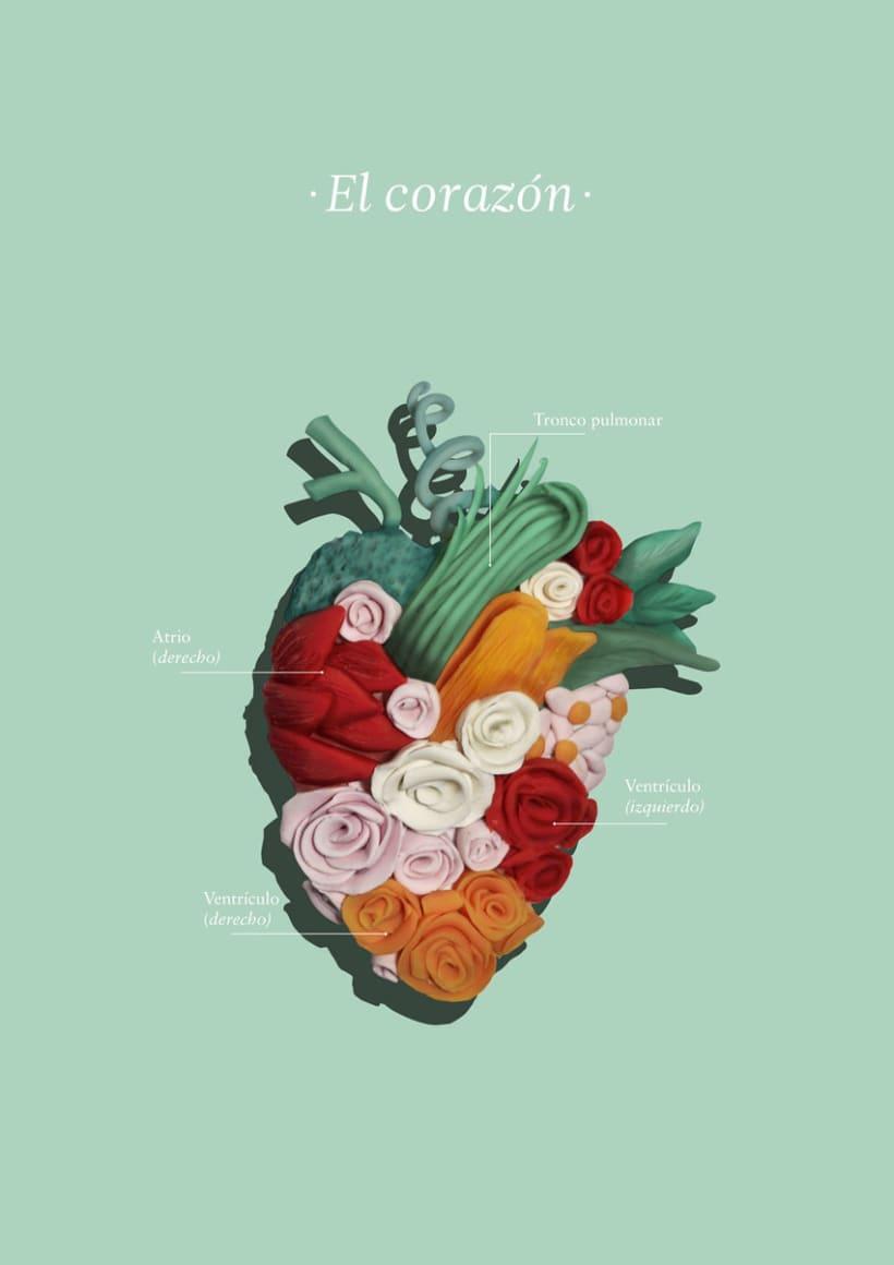 El corazón -1