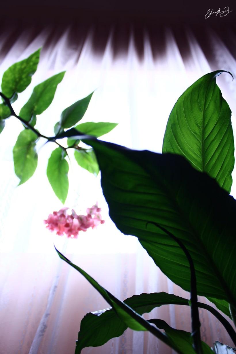 Ramona Garden 2