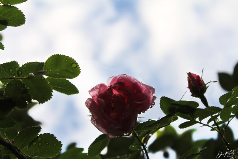 Ramona Garden 14