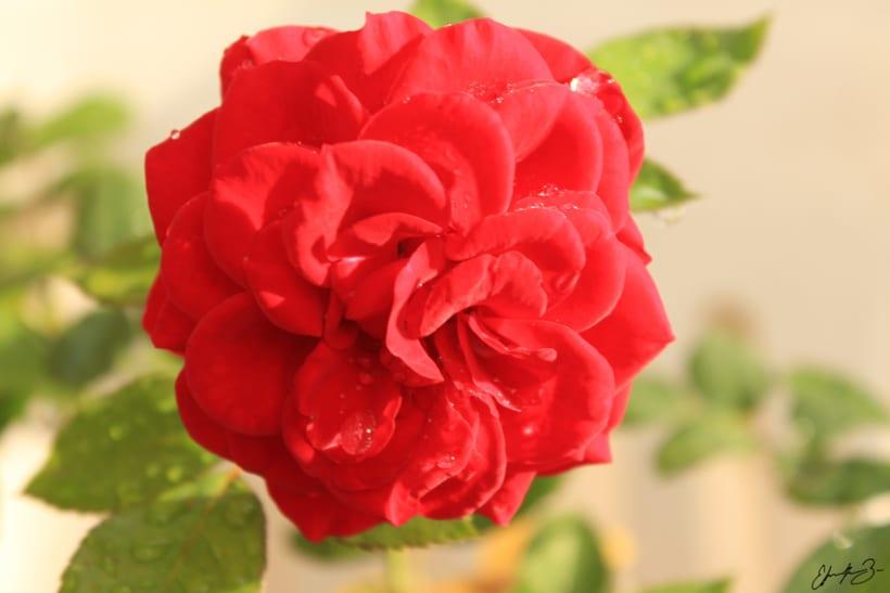 Ramona Garden 16
