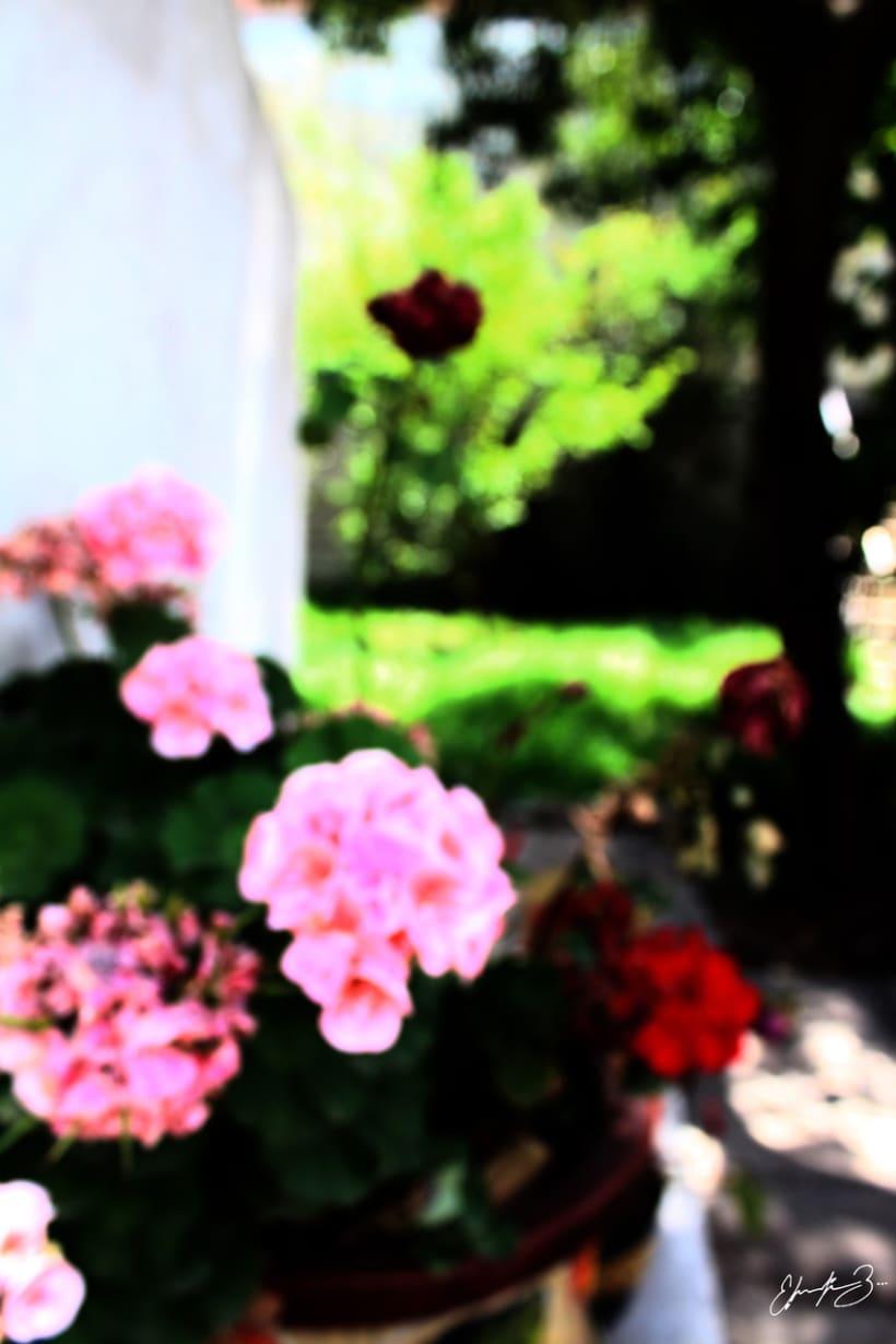Ramona Garden 20