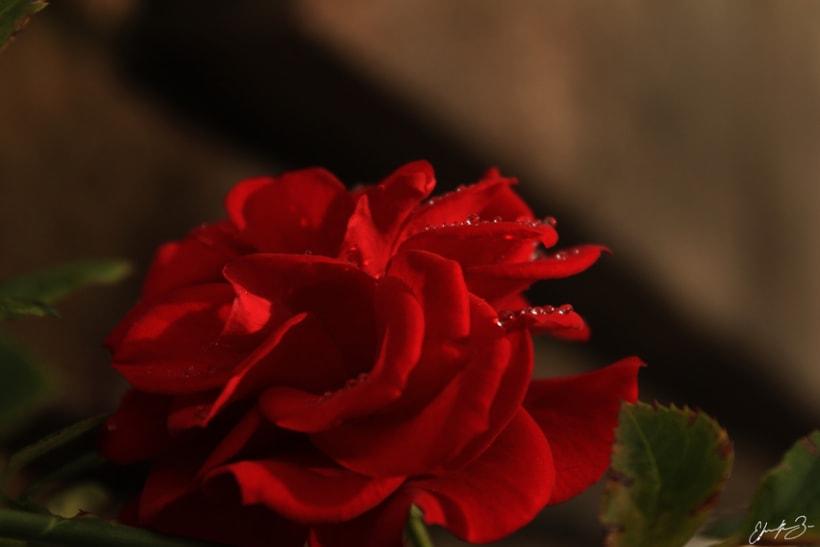 Ramona Garden 32