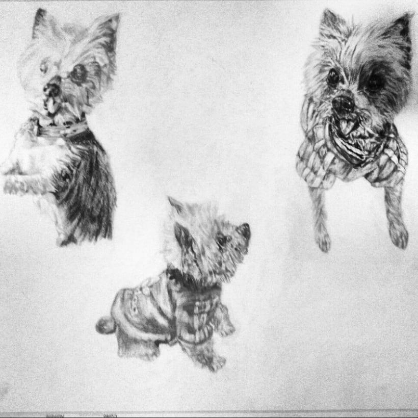 Animales -1