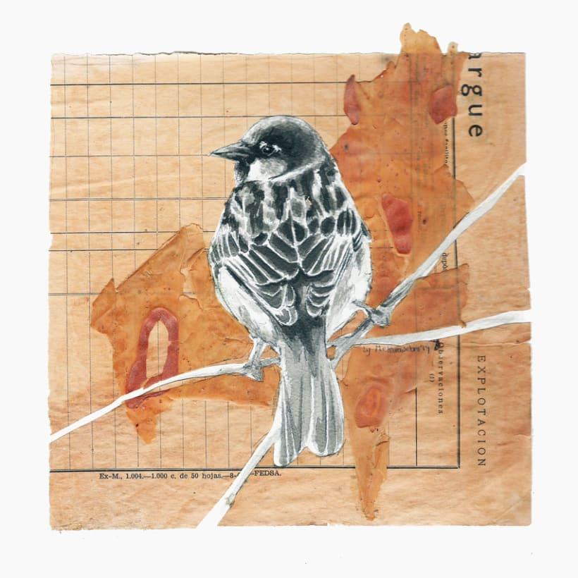 Sparrow study -1