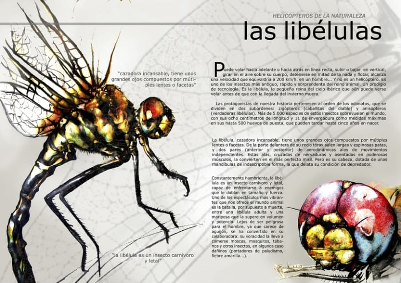 Libélula (ilustración científica) -1