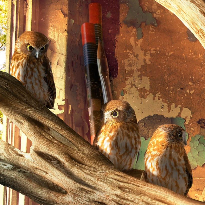 King Owl 6