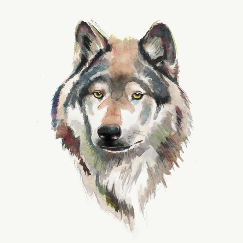 Wolf (Study) -1