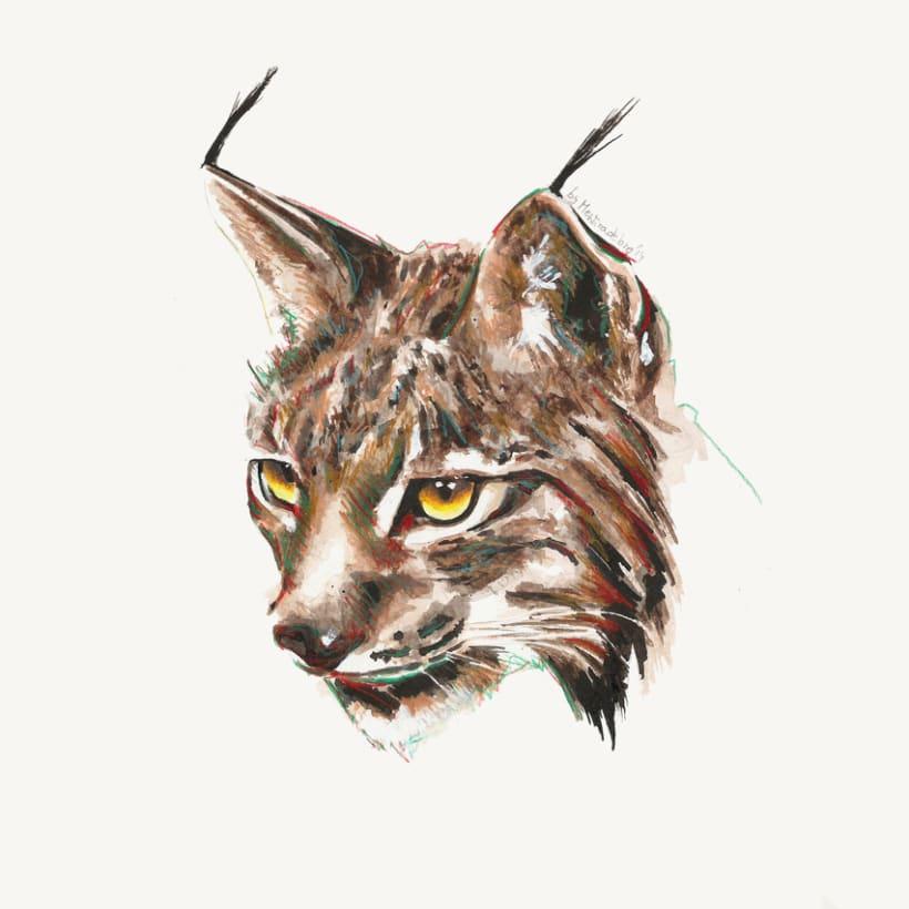 Lynx (study) -1