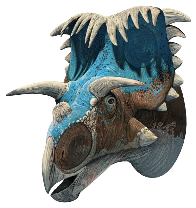 Nuevos Dinosaurios Ceratopsios 2