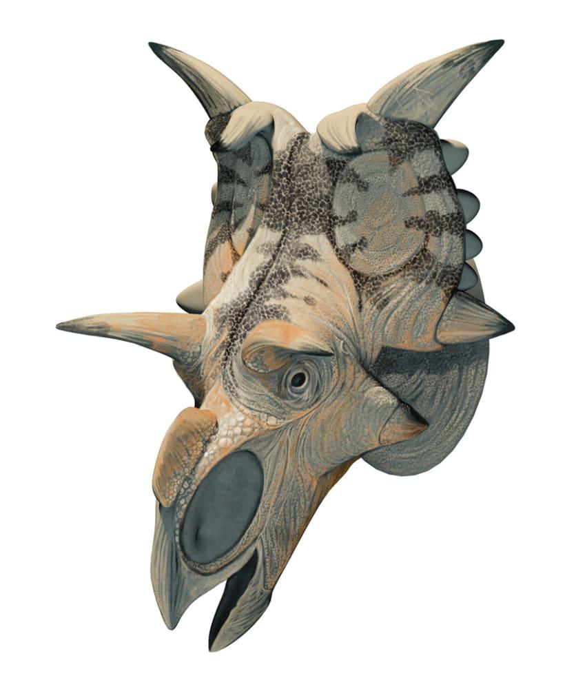 Nuevos Dinosaurios Ceratopsios 6