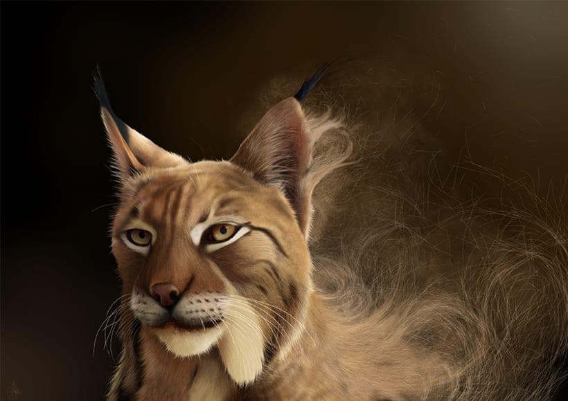 Lynx Pardinus 1