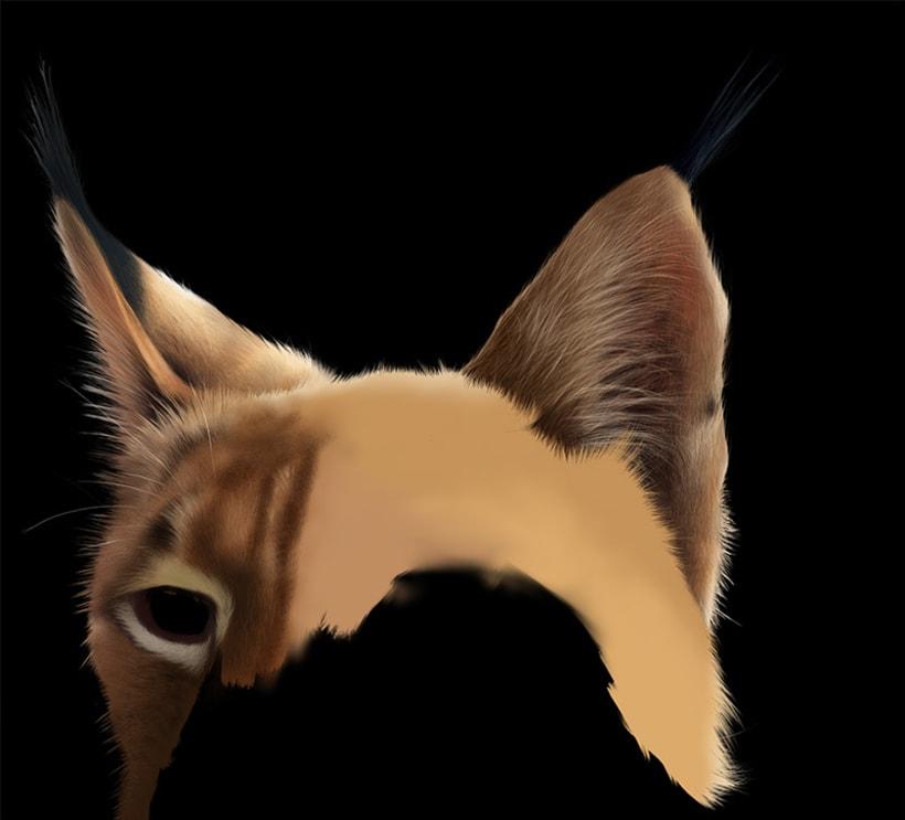 Lynx Pardinus 12