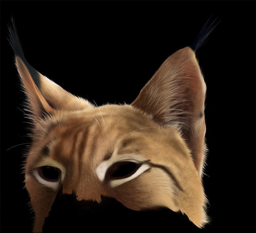 Lynx Pardinus 13
