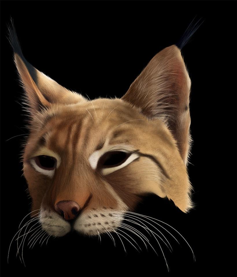 Lynx Pardinus 14