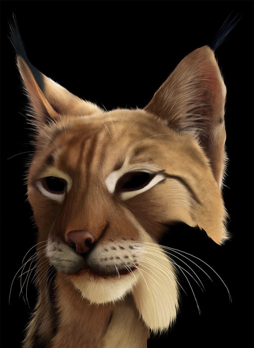 Lynx Pardinus 15
