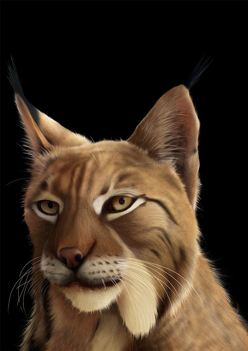Lynx Pardinus 16
