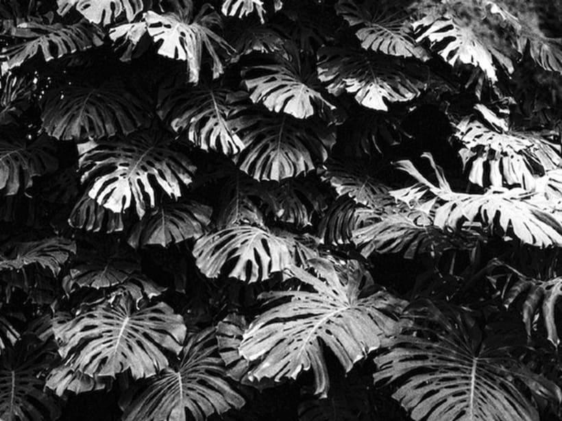 Gris marengo  ( fotografía, proyecto personal , analógico) 5