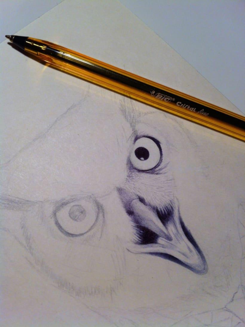 Eyellow 1