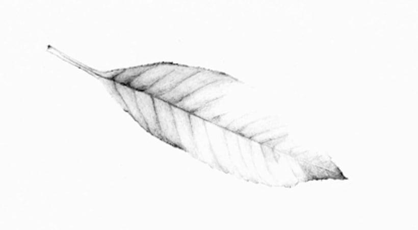 Il·lustració Naturalista 1