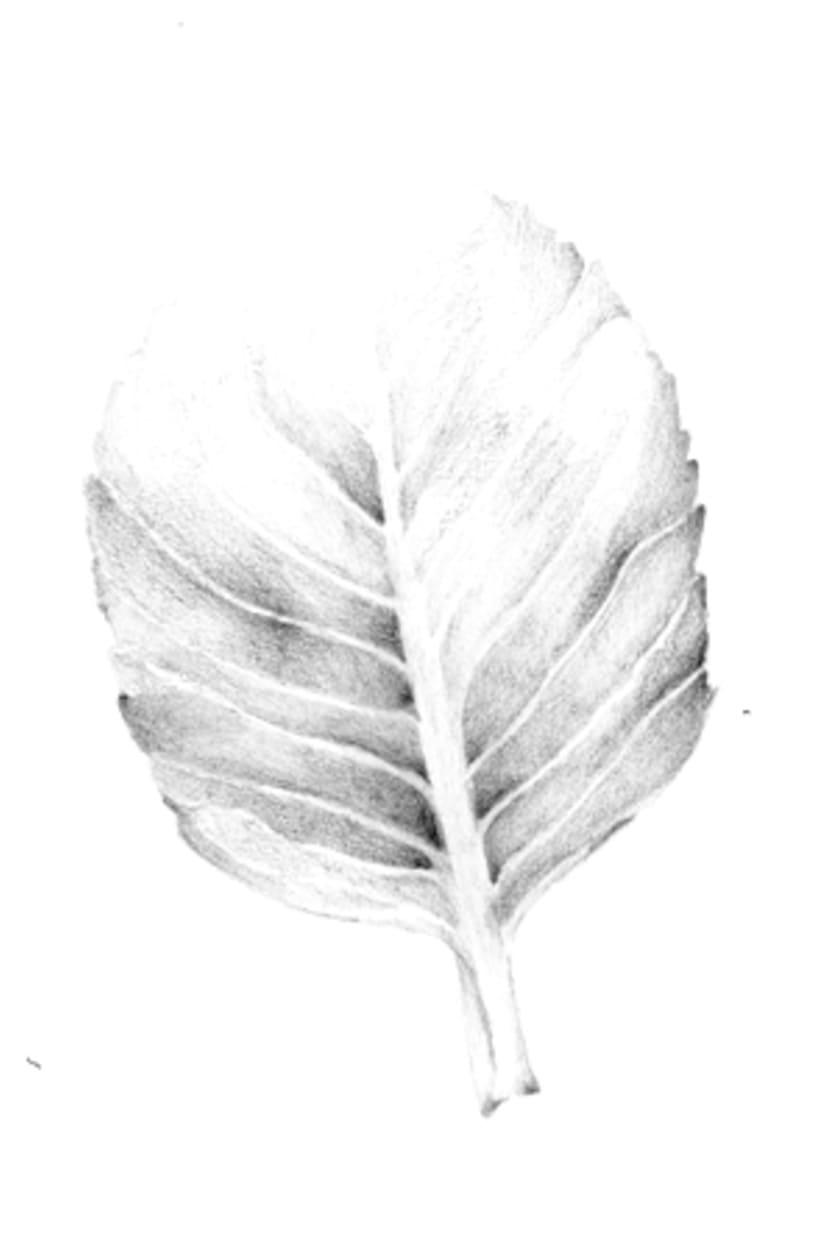 Il·lustració Naturalista 2