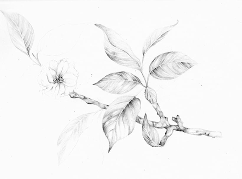 Il·lustració Naturalista 3