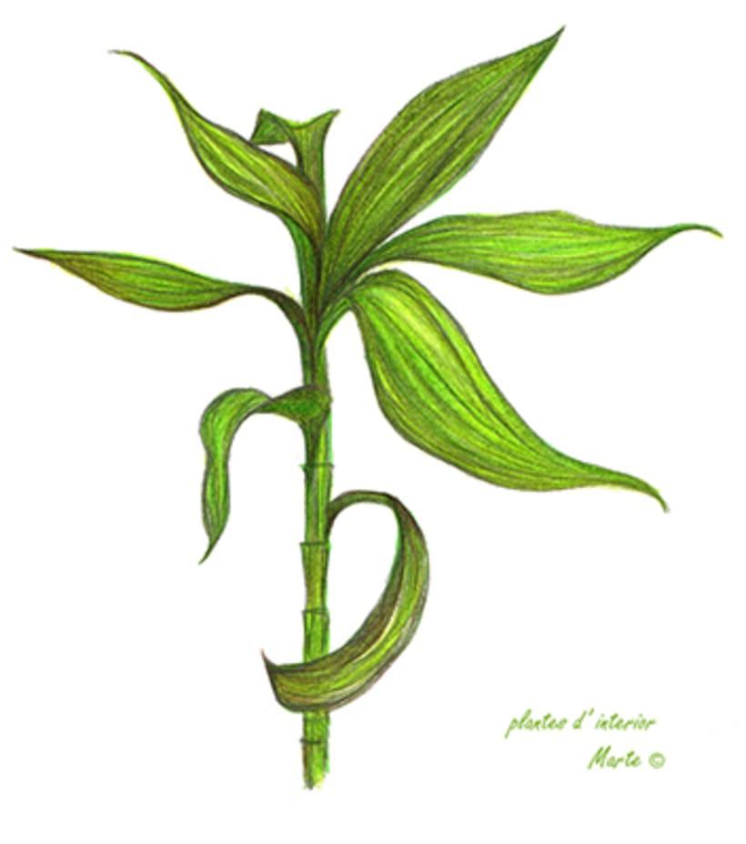 Il·lustració Naturalista 4