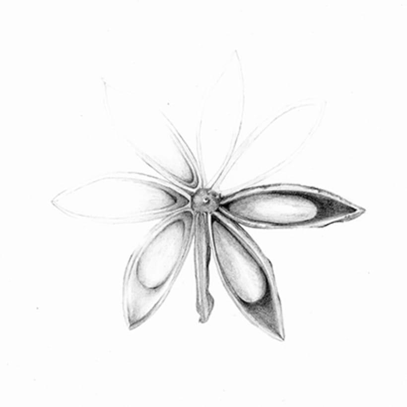 Il·lustració Naturalista 5