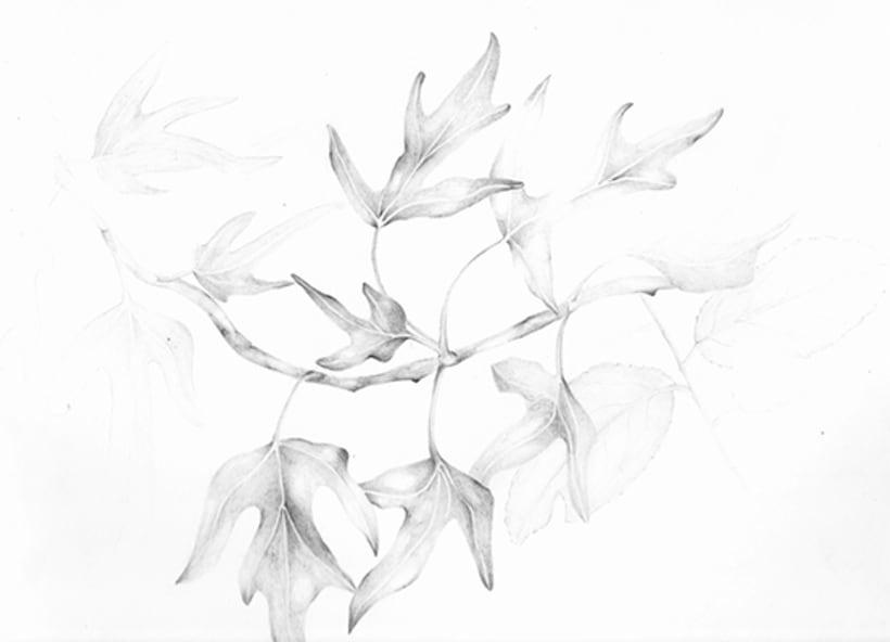 Il·lustració Naturalista 7