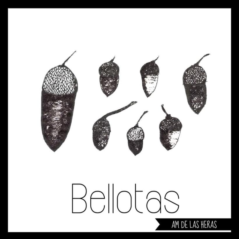 BELLOTAS 0