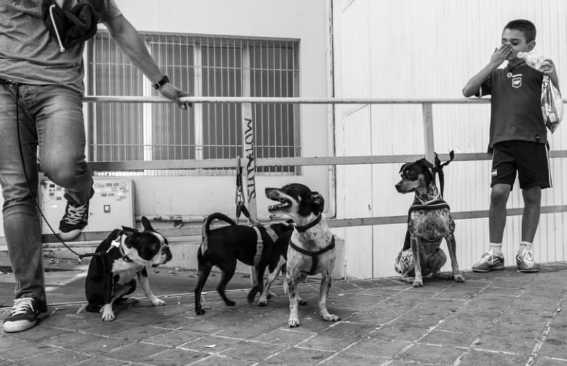 Madrid Photo Street 0