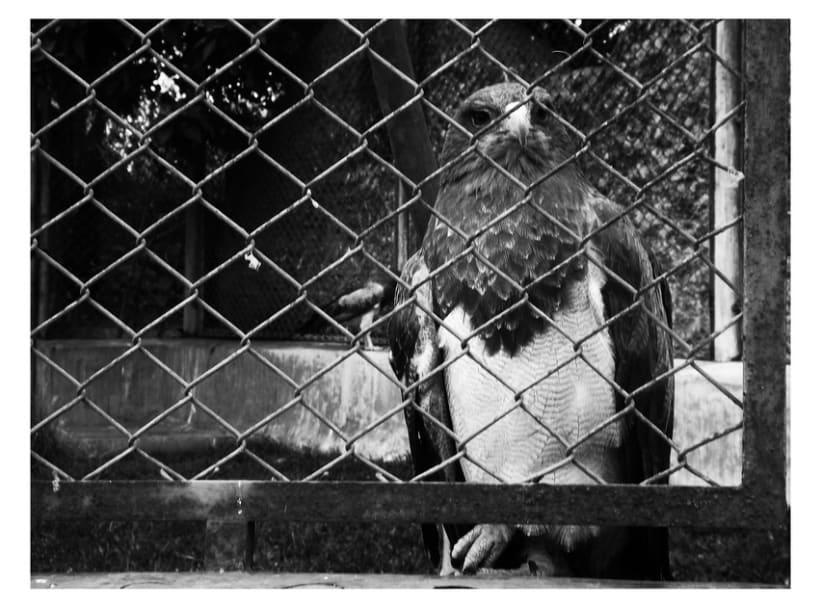 Fotografía Maltrato Animal -1