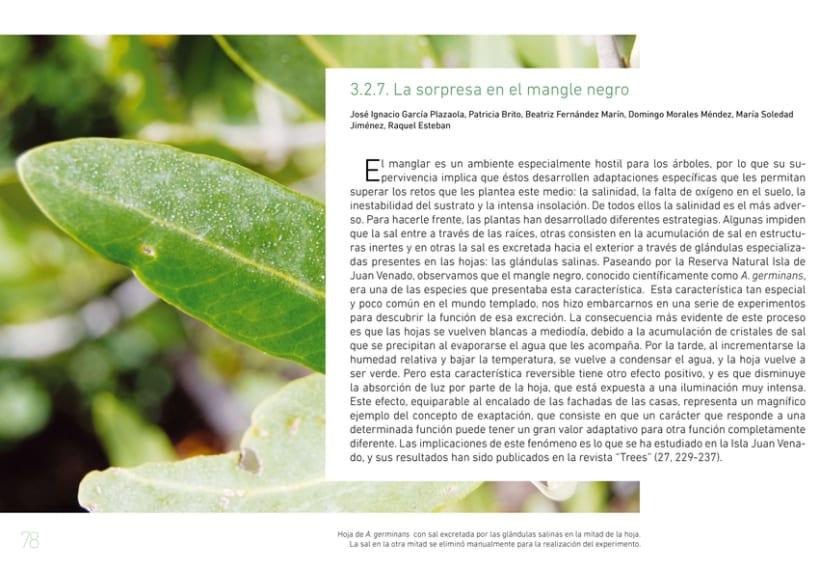 A pie de manglar. Diseño editorial 9